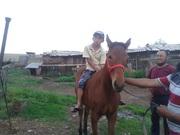 Обучаю детей ездить на лошади в Алматы